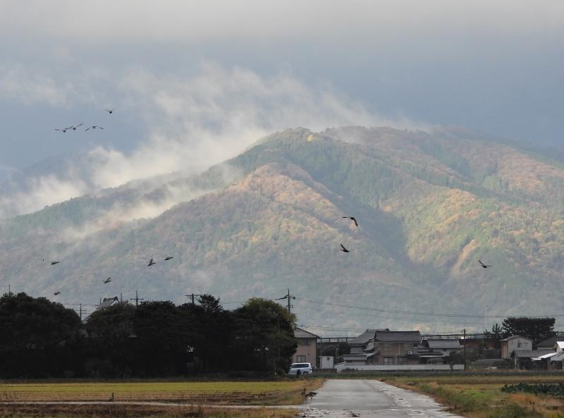 Hiikawa1