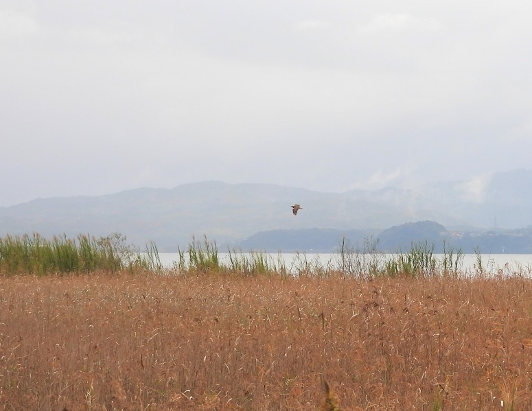 Sankanogoi